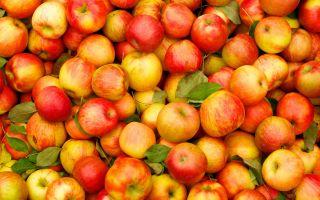 Можно ли употреблять яблоки при панкреатите