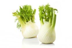 Польза фенхеля для поджелудочной железы