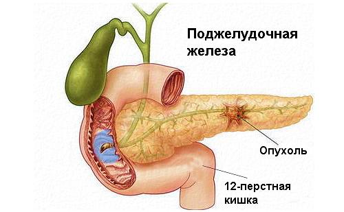 Болезни роз фото описание и лечение народными средствами