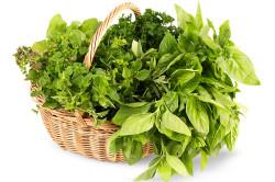Вред свежей зелени при панкреатите