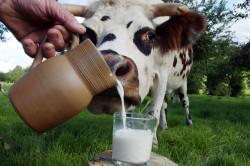 Польза молока при панкреатите