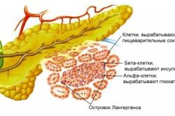 Пищеварительные ферменты поджелудочной железы