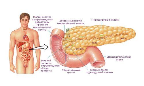 Липоматоз поджелудочной железы носит необратимый характер и приводит к жировой дистрофии поджелудочной железы с утратой жизненно важных функций