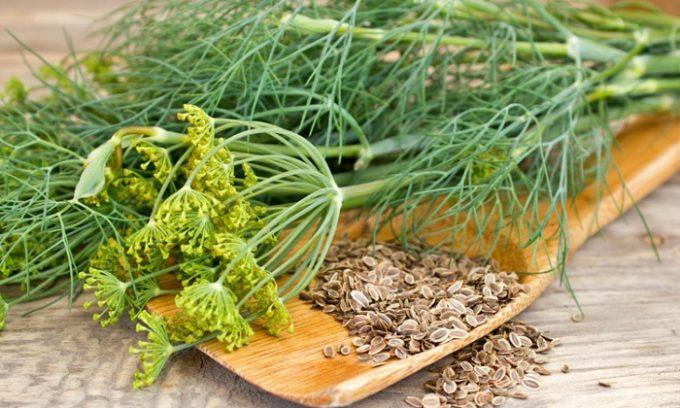 Избавление от боли в животе при панкреатите возможно с помощью семян укропа