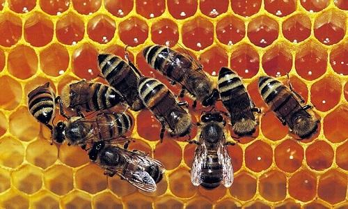 Забрусный мед - это продукт, который используется пчелами для закрытия входа в соты