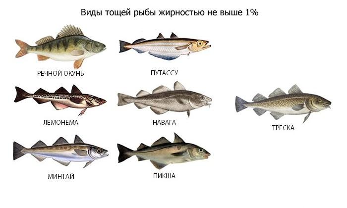 При панкреатите разрешены только нежирные виды рыб, поэтому уха из пикши, минтая, хека, воблы или щуки станет подходящим блюдом в период ремиссии заболевания